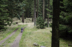 Small kid cycling in the forest Royalty Free Stock Photos