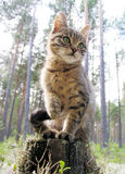 The small kitten. Sits on a stub in a wood Royalty Free Stock Image