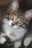 Small kitten. Royalty Free Stock Photography