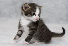 Small kitten. First look to the world Royalty Free Stock Photos