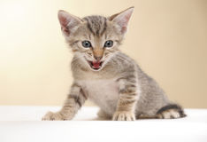 Small kitten. On a white yellow background royalty free stock photography