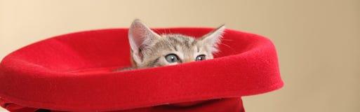 Small kitten stock photography
