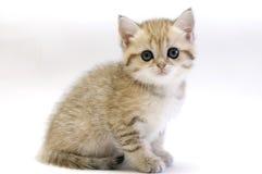 Small kitten. Small kitten isolated on white Stock Image