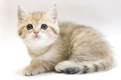 Small kitten. Stock Photography