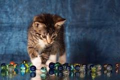 Small kitten Royalty Free Stock Photo