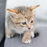 A small kitten Stock Images