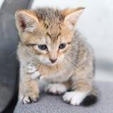A small kitten Royalty Free Stock Photo