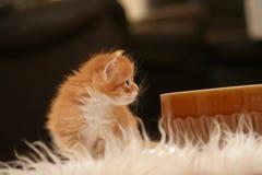 Small kitten royalty free stock photography