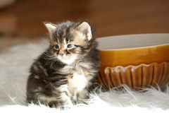 Small kitten Stock Photos