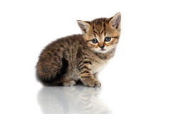 Small kitten. It is isolated on a white background Royalty Free Stock Images