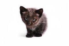 The small kitten Stock Photo
