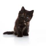 Small kitten Stock Photo