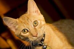 Small Kitten. Small tabby kitten in a home environment Stock Photos