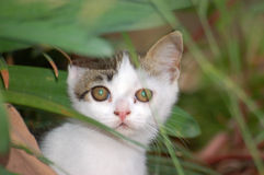 A small kitten. Small kitten pictured peeking behind a leaf Stock Image