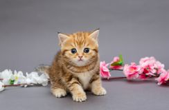 Small kitten and aflowers stock photos