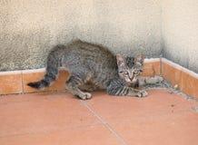 Small kitten on alert Stock Photo
