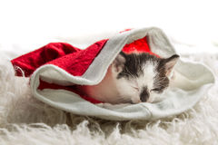 Small kitten as a gift for Christmas Stock Photography