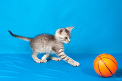 Small kitten with a ball Stock Photo