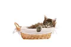 Small kitten in basket Stock Image