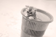 Small kitten in a basket Stock Photography