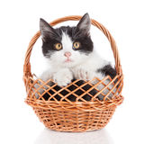 Small kitten in basket isolated on white Stock Photography