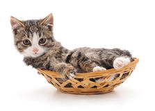 Small kitten in a basket. Small kitten in a basket on a white background Stock Images