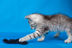 Small kitten with a beads Stock Photo