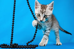 Small kitten with a beads Royalty Free Stock Images