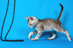 Small kitten with a beads Royalty Free Stock Photography
