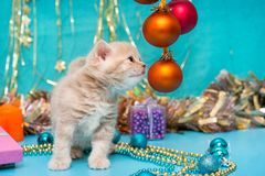 Small  kitten beige color and Christmas Stock Photo