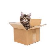 Small kitten in box Royalty Free Stock Photography