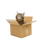 Small kitten in box Royalty Free Stock Photo