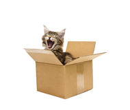 Small kitten in box Stock Images