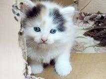 Small kitten in box Stock Photo