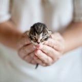 Small kitten Stock Images