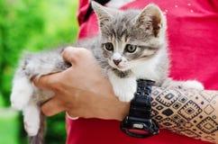 Small kitten Stock Image