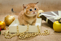 Small kitten and Christmas decoration Royalty Free Stock Photography