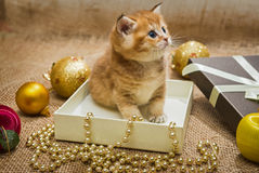 Small kitten and Christmas decoration Royalty Free Stock Images
