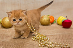 Small  kitten and Christmas decoration Royalty Free Stock Image