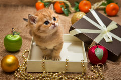 Small kitten and Christmas decoration Stock Photo