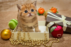 Small kitten and Christmas decoration Stock Image