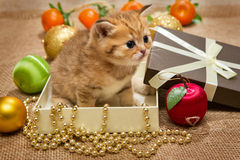 Small kitten and Christmas decoration Stock Photos