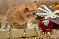 Small kitten and Christmas decoration Stock Photography