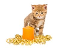 Small  kitten  and Christmas decorations Stock Photos