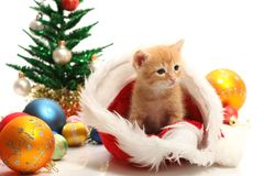 Small kitten and christmas ornaments Royalty Free Stock Photos