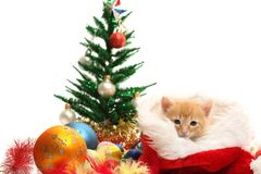 Small kitten and christmas ornaments Stock Images