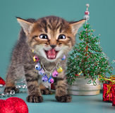 Small  kitten among Christmas stuff Stock Images