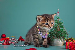 Small  kitten among Christmas stuff Royalty Free Stock Photo