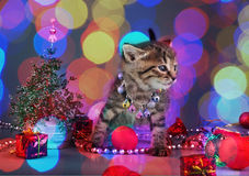 Small  kitten among Christmas stuff Stock Image