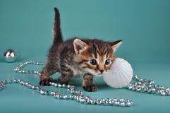 Small  kitten among Christmas stuff Royalty Free Stock Photography